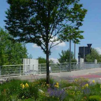 Beispiele für Blühflächen für Insekten am Bodensee